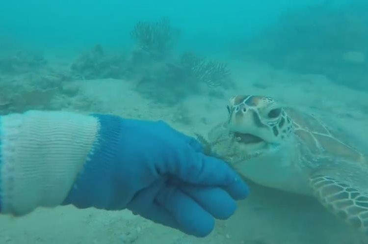 Un buzo alimenta a una tortuga marina. (Foto Prensa Libre: YouTube)