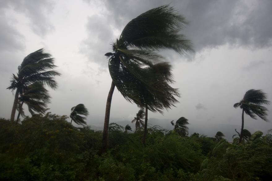 """Palmeras se mueven por la fuerza del viento de """"Matthew"""" en Puerto Príncipe, Haití. (Foto Prensa Libre: AP)."""
