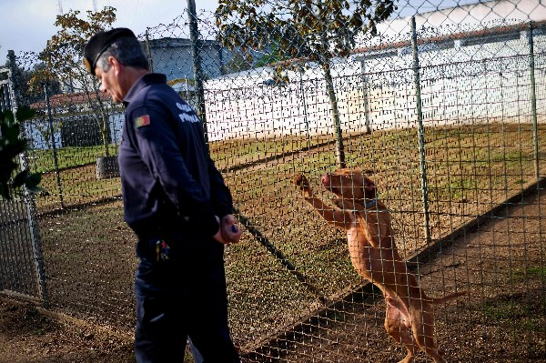 La prisión de Monsanto situado en Lisboa atiende a los perros por los internos. ((AFP).