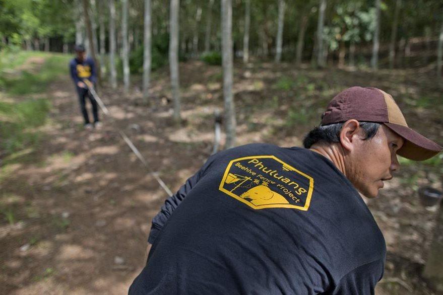 Campesinos señalizan el área de una granja donde colocarán las abejas para ahuyentar a los elefantes. (Foto Prensa Libre: AP).