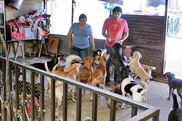 Miriam Morán  y su hijo, Eduardo Abac, muestran uno de los apartados de la casa donde tienen canes.