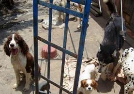 La ley que protege a los animales en Guatemala entrará en vigencia ocho días después de su publicación en el diario oficial. (Foto Prensa Libre: Hemeroteca PL)
