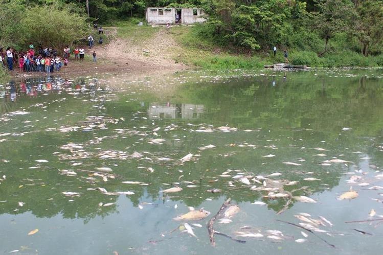 Miles de peces murieron debido a la contaminación en el río La Pasión (Foto Prensa Libre: Hemeroteca).