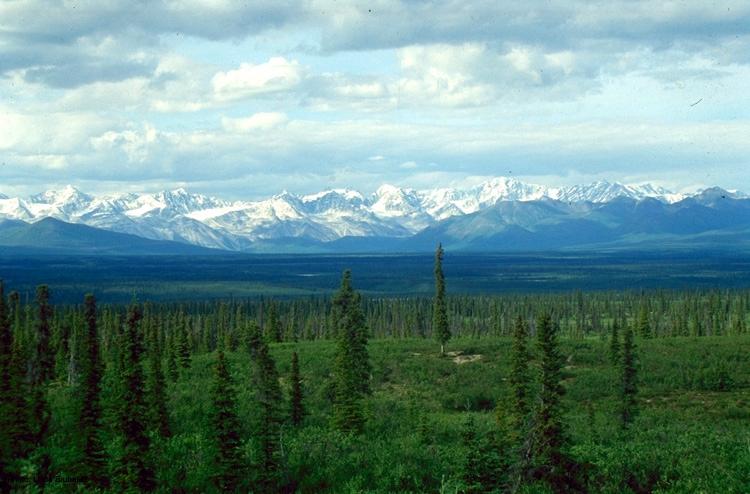 Vista de una parte de la taiga rusa. (Foto: Wikipedia)