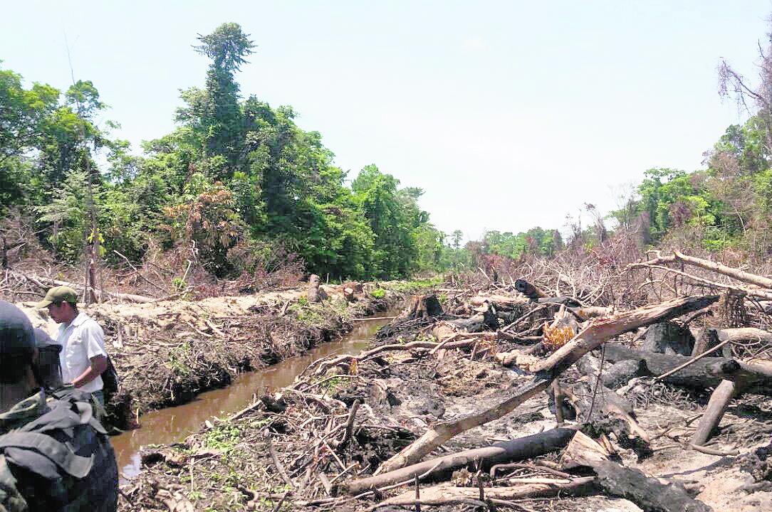 En el área protegida de Punta de Manabique, Izabal, se han talado extensas zonas de bosque debido a la poca vigilancia que puede ejercer el Ministerio de Ambiente, que no cuenta con suficientes guardarrecursos. (Foto Prensa Libre: Hemeroteca PL)