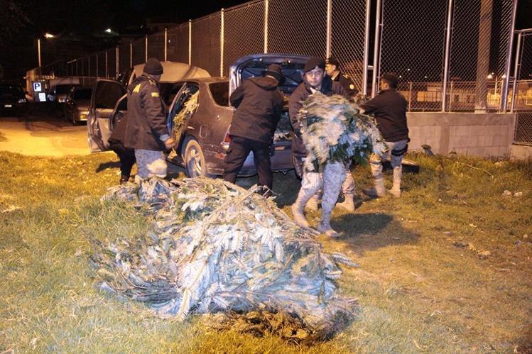 Agentes de Diprona contabilizan ramillas de pinabete decomisado en San Cristóbal Totonicapán. (Foto Prensa Libre: Édgar Domínguez)