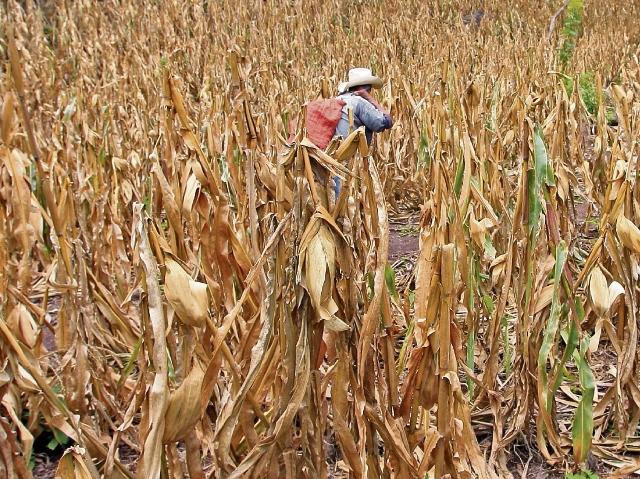 La zona semiárida, más conocida como Corredor Seco, sufrió en los años anteriores la peor sequía en 30 años lo cual desató una crisis humanitaria en la región.