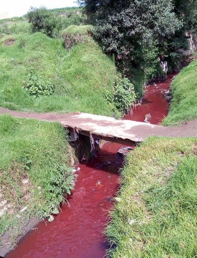 Las autoridades del Marn no encontraron el área en la que empezó la contaminación. (Foto Prensa Libre: Alexis Tovar)