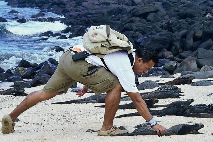 Eduardo Espinoza, científico del Parque Nacional Galápagos, monitorea iguanas marinas en la isla de Santa Cruz, de Galápagos. (Foto Prensa Libre:AFP).