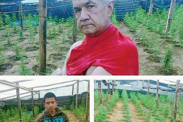 Al menos 70 matas de marihuana eran cultivadas en un vivero en Santa Cruz Balanyá, Chimaltenango. (Foto Prensa Libre: PNC)