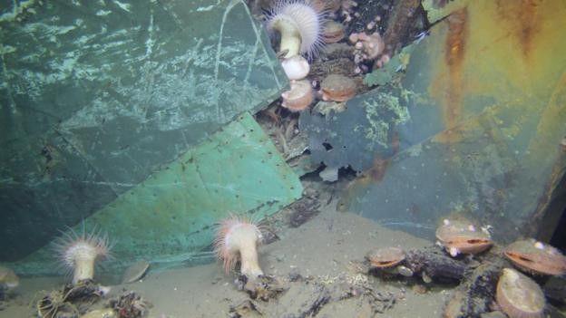 Los naufragios constituyen verdaderos monumentos históricos. BOEM