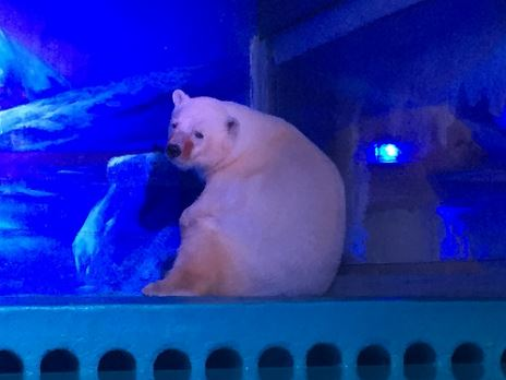 Las fotos del oso polar con aspecto triste han conmovido a la sociedad china. (Foto: Animal Asia).