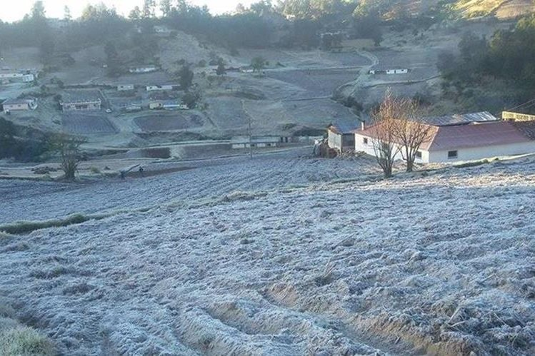 Cultivos de hortalizas dañados por heladas. (Foto Prensa Libre: Hemeroteca)