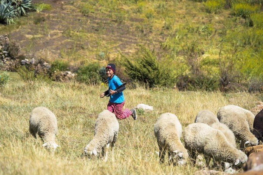 Para entretenerse, los niños corretean en los campos donde pastan sus animales. Foto Prensa Libre: Roberto Villalobos Viato.