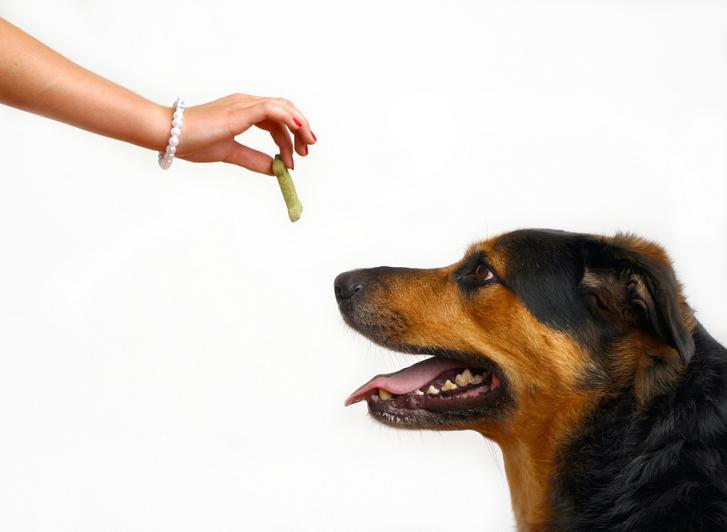 Los perros recuerdan lo que alguien acaba de hacer aunque no esperen que se les pida que lo repitan o se les de una recompensa.
