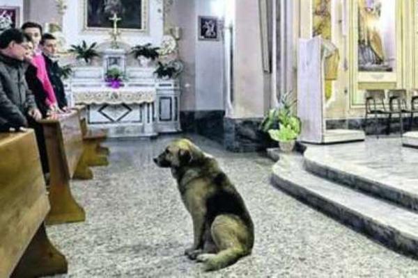 <p>Tommy llega a la iglesia en búsqueda de su dueña, fallecida hace dos meses. (Foto Prensa Libre: Il Messaggero)</p>