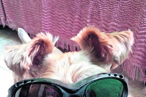 <p>Ancianos y discapacitados se benefician de las terapias asistidas con perros.</p>