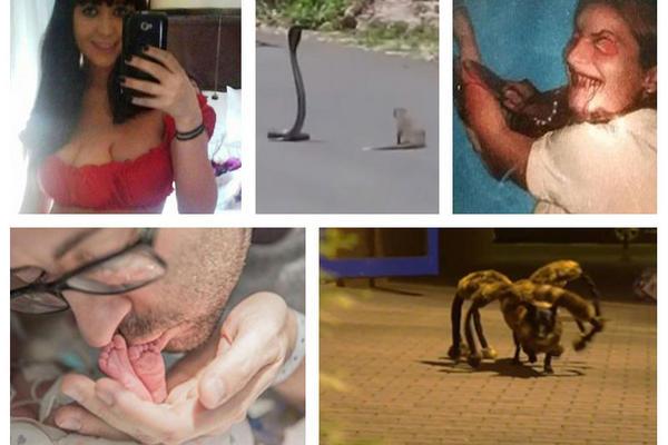 """<p>Notas virales que fueron polémicas en el 2014. (Fotoarte Prensa Libre)<br _mce_bogus=""""1""""></p>"""