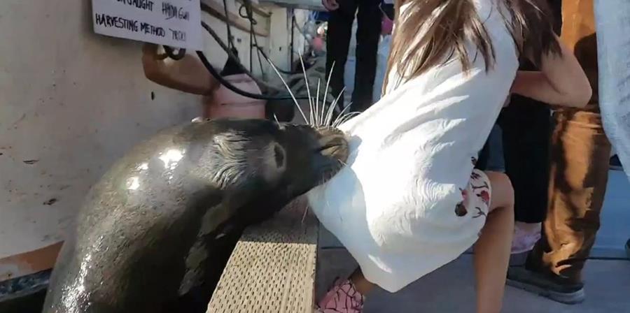 El león marino atrapa a la niña en el muelle de Steveston, en Vancouver, Canadá. (Foto Prensa Libre: Youtube)