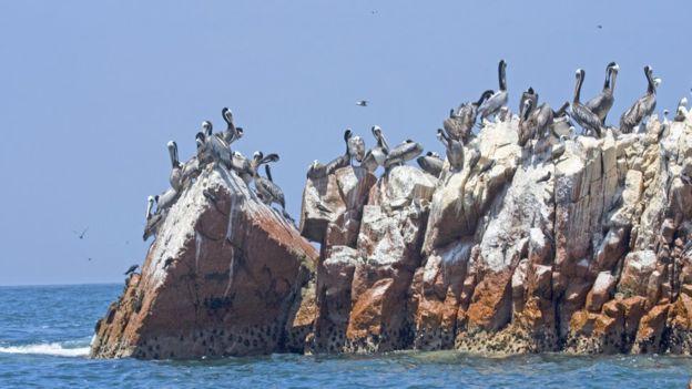 El guano acumulado durante siglos en la superficie de las islas de Perú fue explotado en el siglo XIX como abono. THINKSTOCK