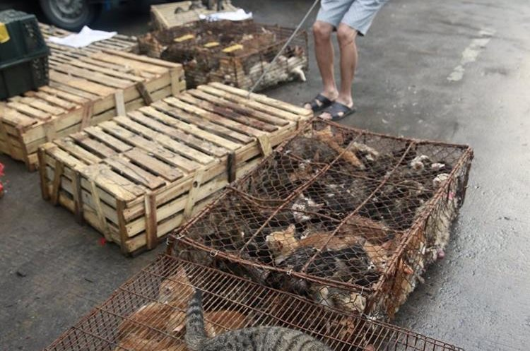 La Policía china evita que 500 gatos acaben siendo parte del menú