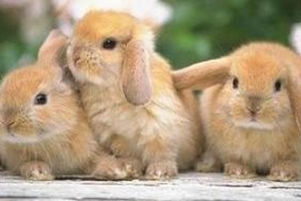 """<p>Los conejos son excelentes mascotas que necesitan de atención.<br _mce_bogus=""""1""""></p>"""
