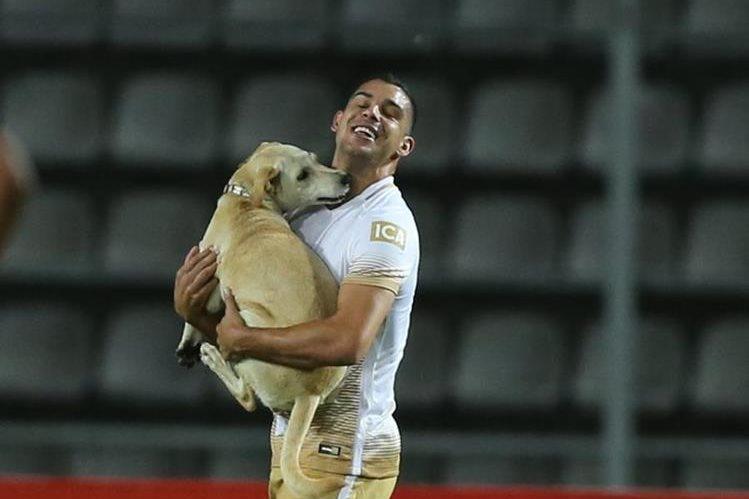 El partido de la Copa Libertadores, entre el Táchira y Pumas, fue interrumpido por un perro. (Foto Prensa Libre: AFP)