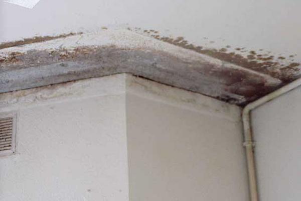 C mo eliminar manchas de humedad de las paredes - Manchas humedad pared ...