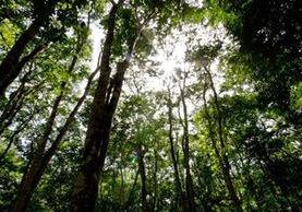 A partir del próximo 1 de junio se podrán empezar a realizar las donaciones para sembrar un árbol. (Foto Prensa Libre: Hemeroteca)