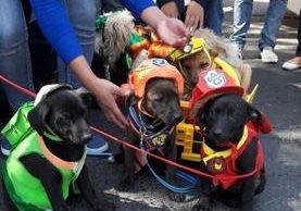 Algunos de los perros que participaron en el concurso en Xela. (Foto Prensa Libre: María José Longo).
