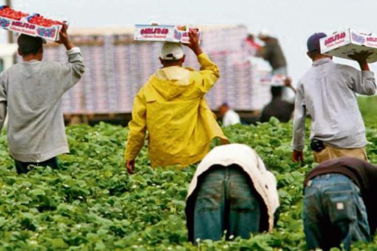 La fuerza laboral de Centroamérica que migra hacia EE. UU. no es calificada.