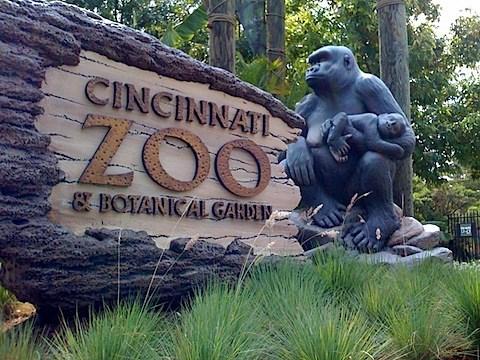 Zoológico de Cincinnati, Estados Unidos, donde fue sacrificado ungorilla.