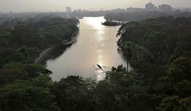 Los árboles son los pulmones del mundo. (Foto Prensa Libre: EFE)
