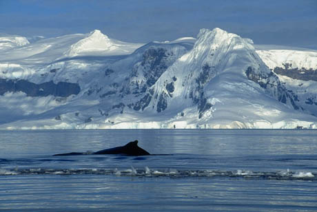 El Ártico está ubicado en el Polo Norte y se caracteriza por maravillosos paísajes. (Foto Prensa Libre: Internet).
