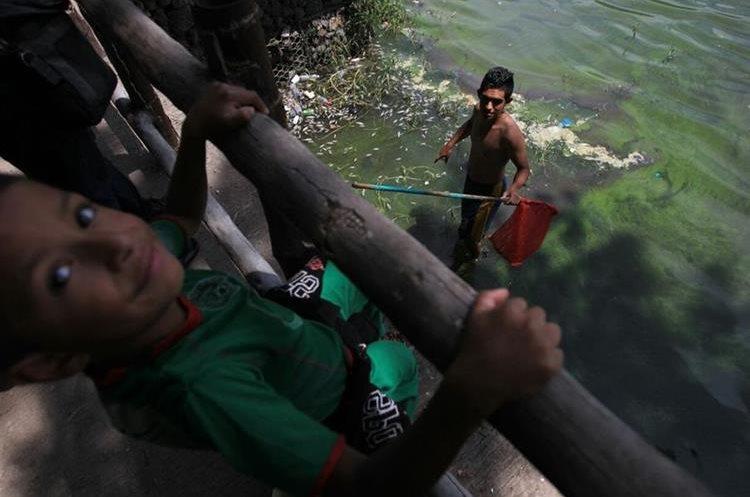 Contaminaci n provoca mortandad de peces en amatitl n for Cria de peces para consumo humano