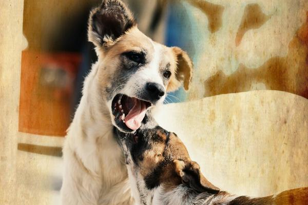 """<p>Alrededor cinco millones de perros viven en las calles de Guatemala (Foto Prensa Libre: Álvaro Interiano).<br _mce_bogus=""""1""""></p>"""