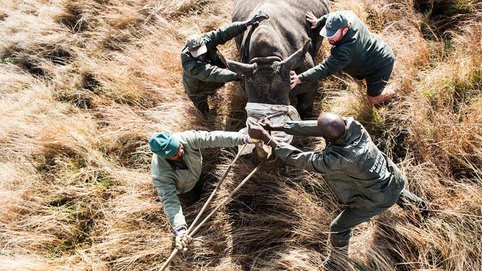Hope es atendida por médicos veterinarios. (Foto Prensa Libre: AFP)