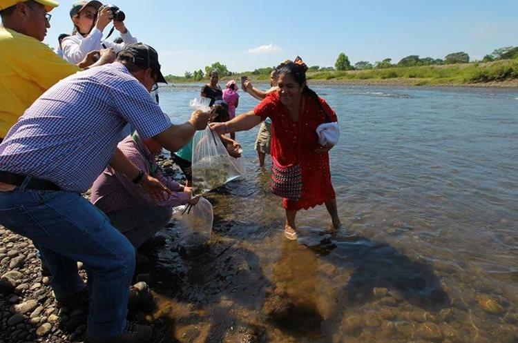La liberación de peces y caracoles contribuyen con la recuperación del río.