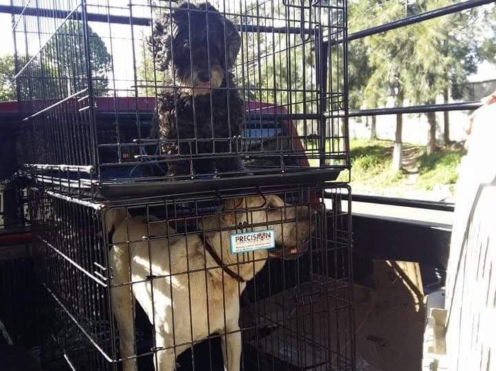 Perros que pertenecían a Byron Lima fueron rescatados de la cárcel. (Foto Prensa Libre: Cortesía)