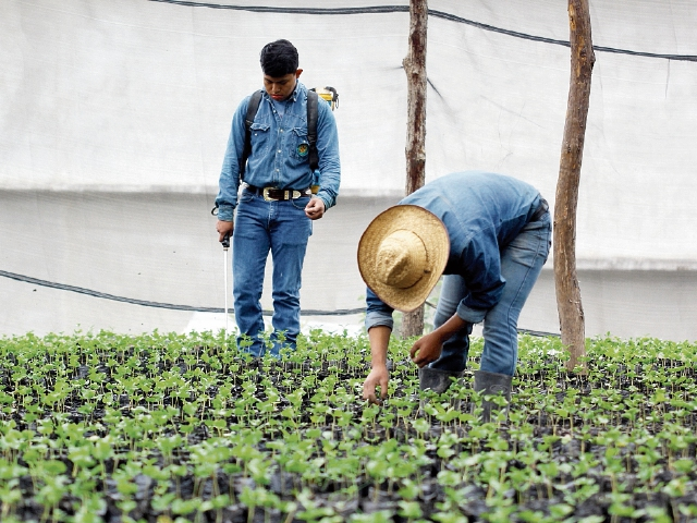 Estudiantes observan  almácigo de café en un invernadero del Itagro. (Foto Prensa Libre: Mike Castillo)