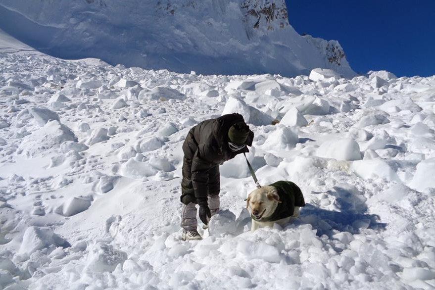 Un perro entrenado participa en las labores de rescate. (Foto Prensa Libre: AFP).