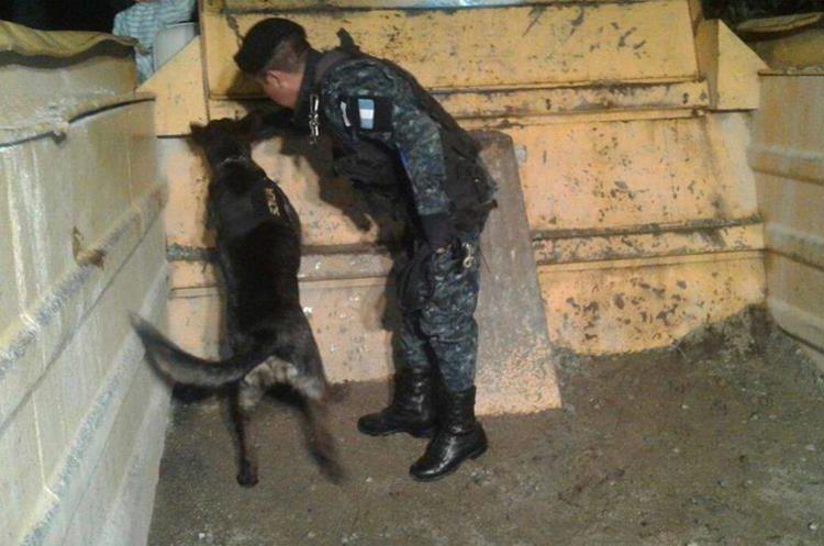 """El agente canino """"Sonja"""" y su guía durante el operativo antinarcótico. (Foto Prensa Libre: PNC)"""