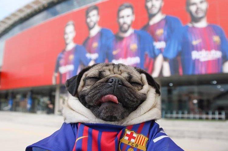 El perrito frente al estadio y que está causando sensación en los aficionados del Barcelona. (Foto Instagram)