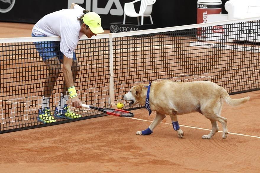 El tenista brasileño Marcelo Demoliner interactúa con un perro entrenado recoger pelotas de tenis. (Foto Prensa Libre: EFE)