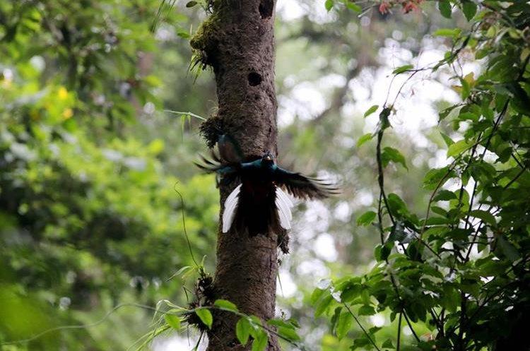 En el bosque de Loma Linda se pueden apreciar varias especies de aves.FOTO PRENSA LIBRE / ROLANDO MIRANDA