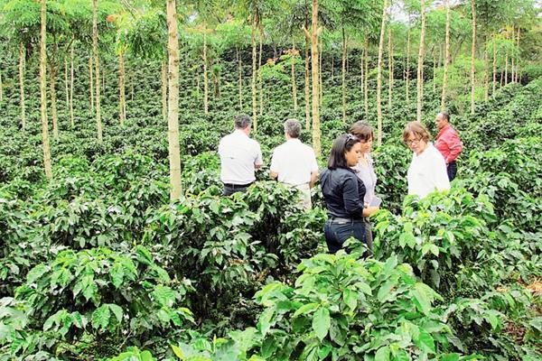Los productores hondureños aumentan sus ventas de café.
