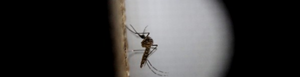 Coordinan plan de acción contra zika.