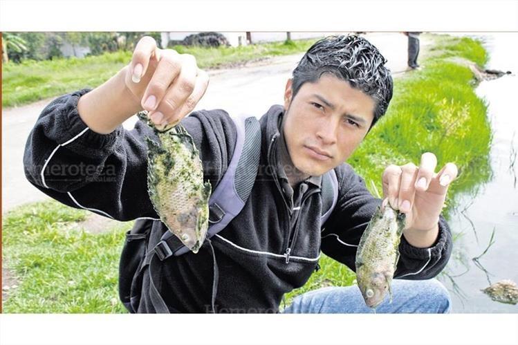 Un vecino muestra dos peces muertos en la laguna Las Garzas, San Antonio Ilotenango, Quiché, en donde fueron encontrados centenares de peces muertos. 2/7/2010. (Foto: Hemeroteca PL)