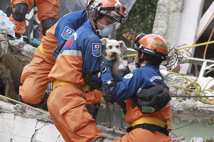 Decenas de mascotas han sido rescatadas luego del terremoto ocurrido en México, que ha dejado al menos 324 personas muertas. (Foto Prensa Libre: EFE)