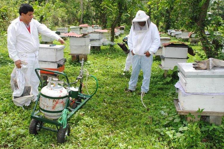 Apicultores de Coatepeque, Quetzaltenango, denuncian mortandad de abejas por cambio climático. (Foto Prensa Libre: Édgar Girón)